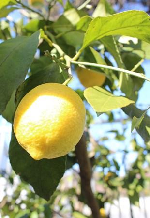 lemon upside-down cake1