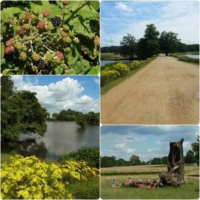 richmond park13
