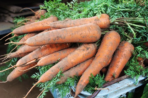 carrot scone1