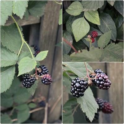 4berrys2